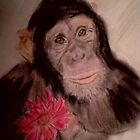 Chimp by DianeL