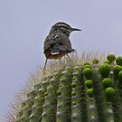 To Prickly to Sit by AudraJS