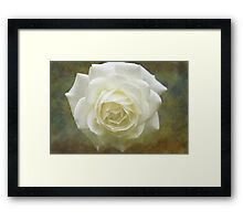 Vintage White Rose Framed Print