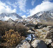 Best Of The Sierras To All My Friends Suffering In The Heat by marilyn diaz