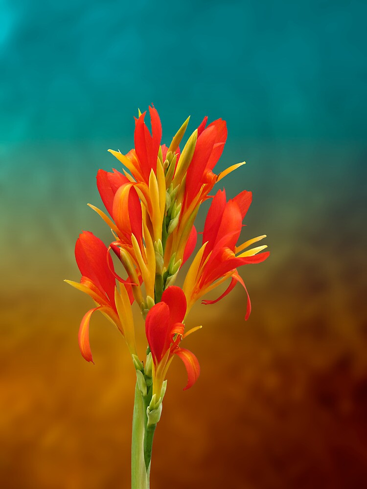 Orange Spray of Flowers by Michael Taggart