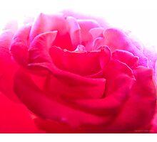 Splendid Rose Photographic Print