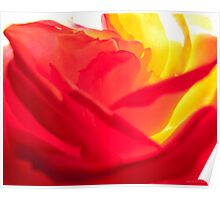 Fiery Rose II Poster
