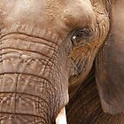 Close Up Elephant by Michelle Munday