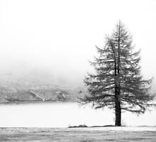 Lonely Tree by meredithnz