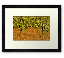 Into The Green Framed Print