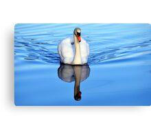 Blue Mirror Swan Canvas Print