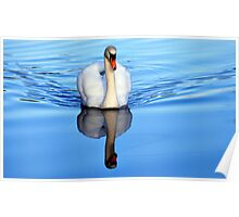 Blue Mirror Swan Poster