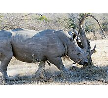 Charging Angry Rhino  Photographic Print
