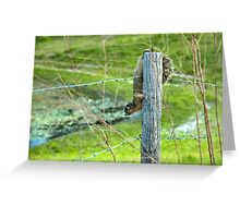 Little Live Wire  Greeting Card