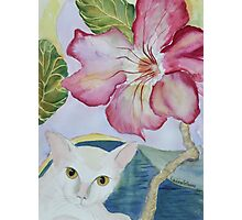 My Desert Rose - Adenium Photographic Print