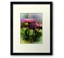 Pink Lotus 2 Framed Print