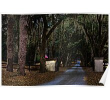 Tree lined Driveway Poster