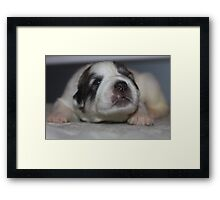 Hewwo My name is Goliath Framed Print
