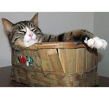 Just Rockin My Basket Photographic Print