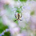 Spider Garden by Bryant Scannell