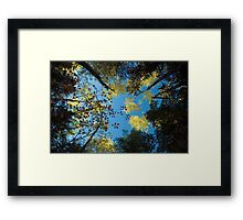 North Shore Fall Colors Framed Print