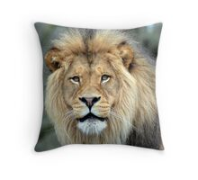 Lion giving me the eye Throw Pillow