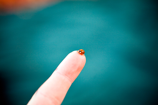 Ladybug by Bryant Scannell