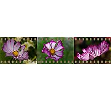 Cosmos filmstrip Photographic Print