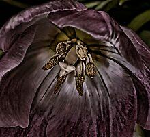 Silvered Mauve by Wendi Donaldson
