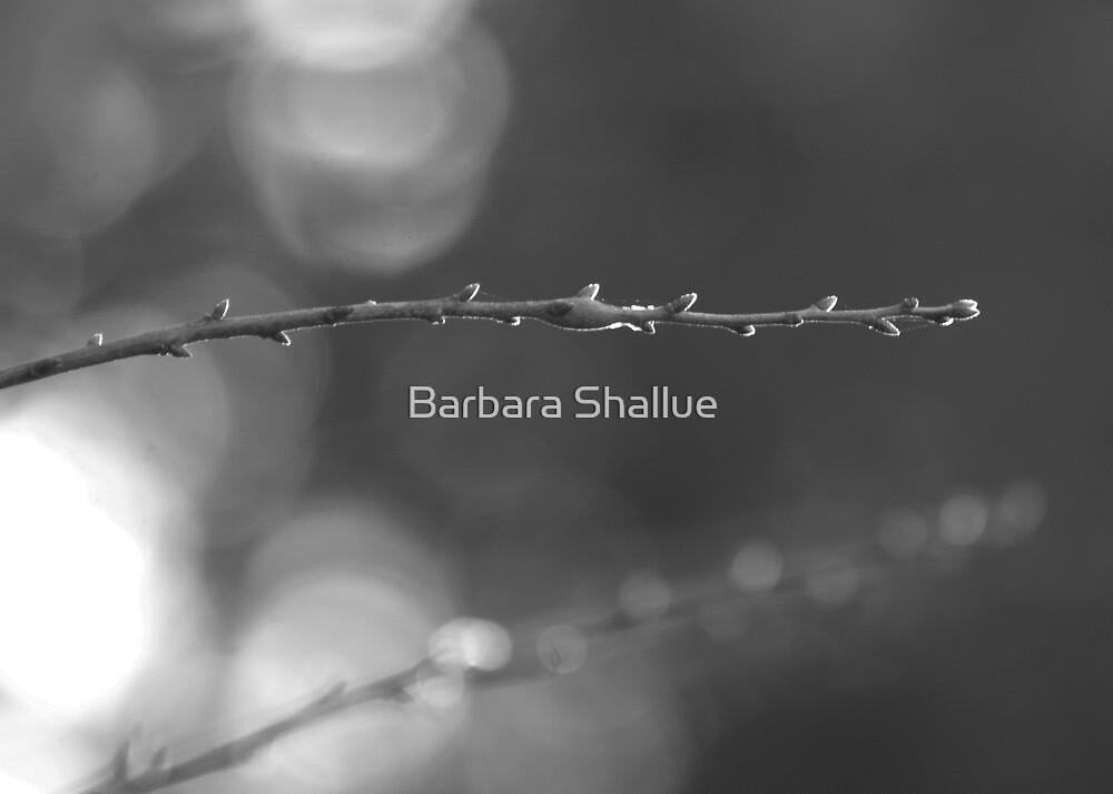 Arlo's Stick by Barbara Shallue