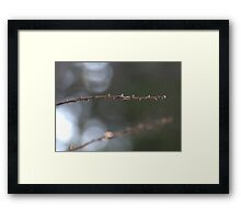 Arlo's Stick (color) Framed Print