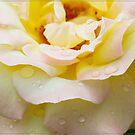 Dewey Eyed Rose 2 by Chris Cohen