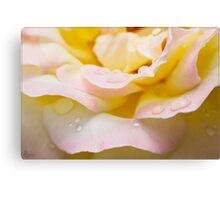 Dewey Eyed Rose 1 Canvas Print