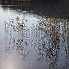 Water Reeds by BrianZvi
