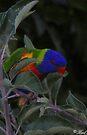 iphone bird skin 001 by Karl David Hill