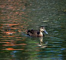 PACIFIC BLACK DUCK by Loreto Bautista Jr.