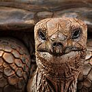 Great-great-great-grand-tortoise by Irina Chuckowree
