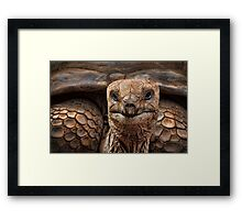 Great-great-great-grand-tortoise Framed Print