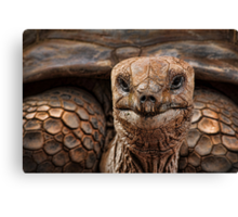 Great-great-great-grand-tortoise Canvas Print