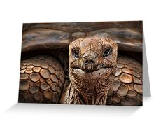 Great-great-great-grand-tortoise Greeting Card