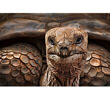 Great-great-great-grand-tortoise Photographic Print