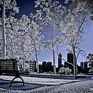 Kings Park ~ Perth by Pene Stevens