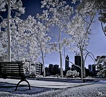 Kings Park ~ Perth by Pene Stevens