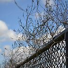 Vine Fence by dez7
