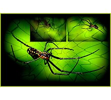 INCY WINCY SPIDER Photographic Print