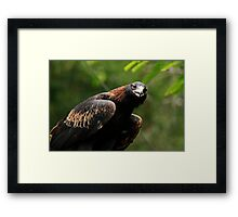 The Eagle's Eye Framed Print