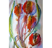 four tulips Photographic Print