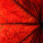 Autumn Red i by RaphArt