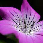 Unknown flower by Deborah Clearwater