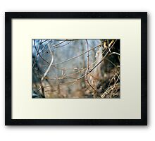 Limbs And Space Framed Print