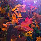 awash in color! by evon ski