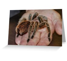 The Chilean Rose Tarantula Greeting Card