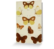 Old Butterfly chart Greeting Card