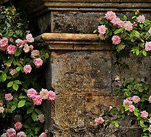 Stones and Roses by Irina Chuckowree